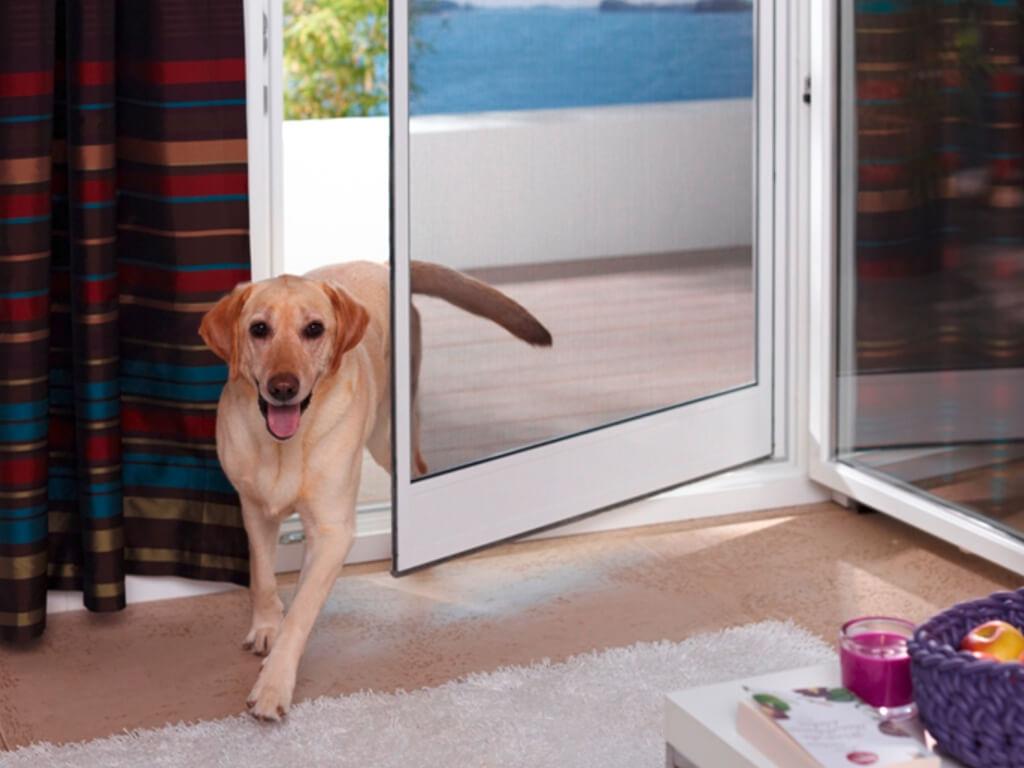 Pendeltür mit Hund